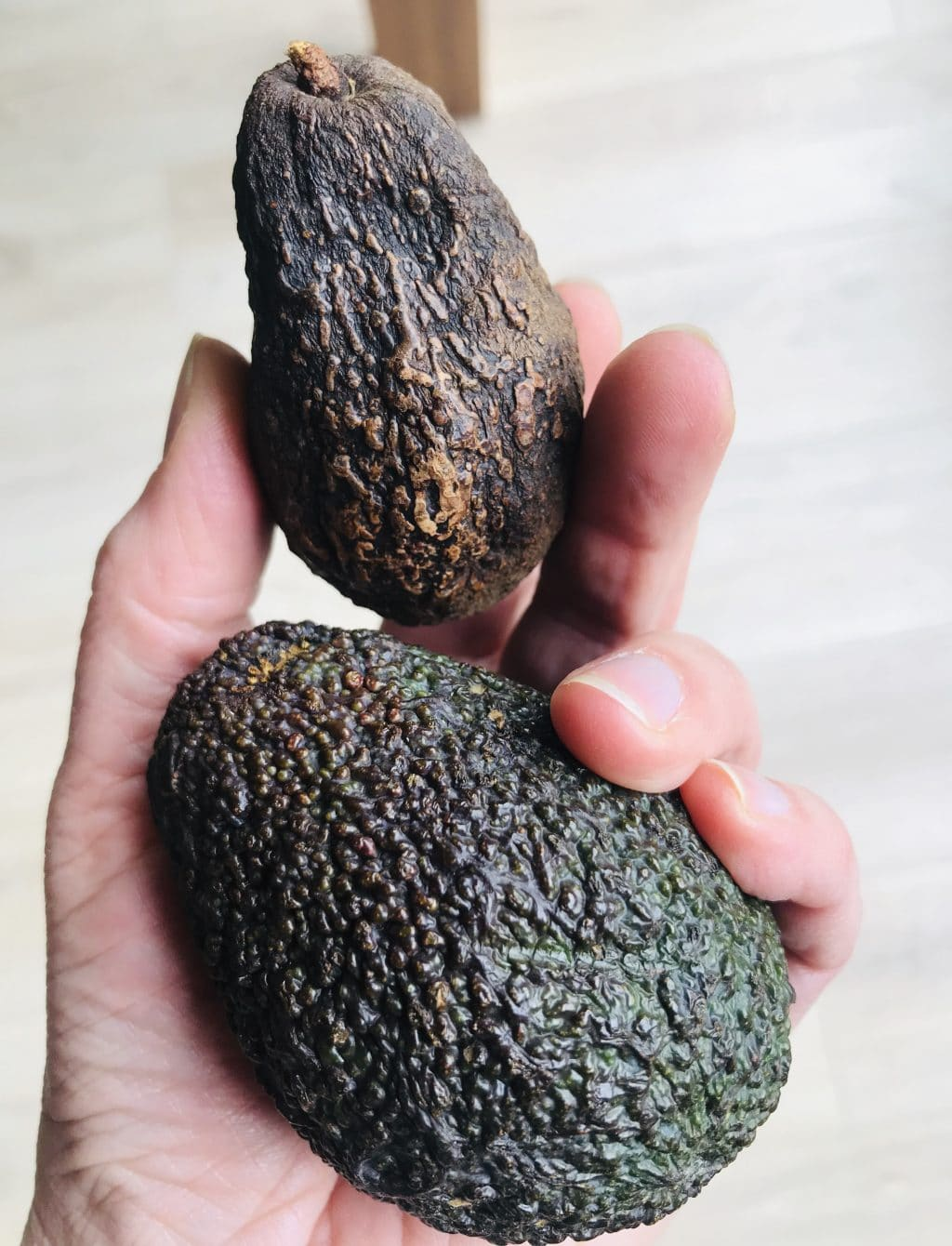 avocado rijp